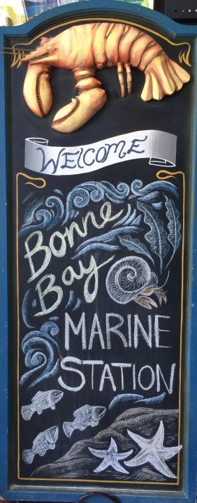 Welcome to Bonne Bay Marine Station
